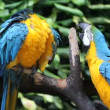 Stock Video: Parrots, close-up, portrait