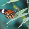Stock Video: Butterfly close up