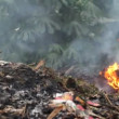 Stock Video: Fire, garbage