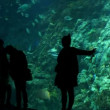 Big aquarium at oceanarium — Stock Video