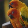 Parrot in tropics — Stockvideo
