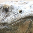 Stock Video: Komodo dragon