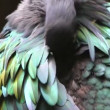 Parrot in tropics — Vídeo Stock