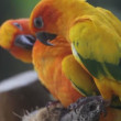 Parrot in tropics — Stock Video