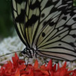 Butterfly close up — Wideo stockowe