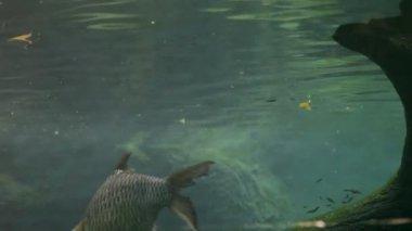 Turtles, fish, underwater — Stock Video