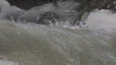 Mountain stream — Stok video