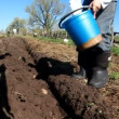 Young boy planting potatoes in the garden — Stock Video