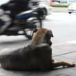 Stray dog — Stock Video #25444805