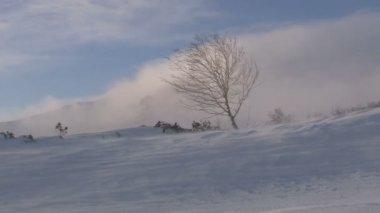 Drifting snow — Stock Video