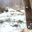 Stock Video: Tree falling in forest