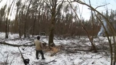 Tree falling in the forest — Video Stock