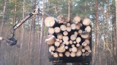 The harvester working in a forest — Stockvideo