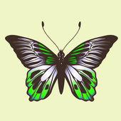 Vlinder — Stockvector