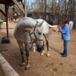 Girl brushing a horse — Stock Photo