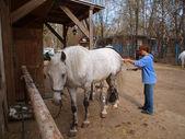 Pulizia cavallo donna — Foto Stock