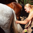 Stock Photo: Girl cleans horse