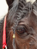 Eye of a horse and bangs — Stock Photo
