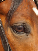 Eye horse closeup — Stock Photo