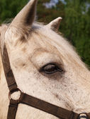 The head horse close-up — Stockfoto