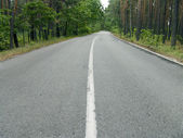 Wide road in forest — Stock Photo