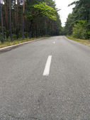 The asphalt road in forest — Stock Photo