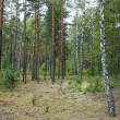 Mixed forest — Stock Photo #13590461