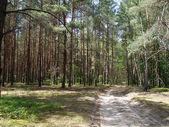 Camino forestal arena — Foto de Stock