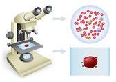 Sangue sob um microscópio — Vetorial Stock