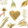 Stock Photo: Collections of wheat ears