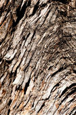 Wood Tree Texture Background — Stock Photo