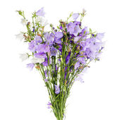 Fresh summer flower bouquet on white background. Bell — Stock Photo