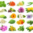 Collection of herbs and flowers — Stock Photo #12653476
