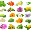 Collection of herbs and flowers — Stock Photo