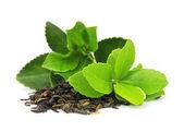 Liści herbaty — Zdjęcie stockowe