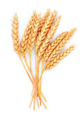 Wheat isolated — Stock Photo