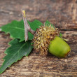 Acorn with leaves — Stock Photo #14294135