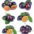 Collage from fresh plums - Stock Photo