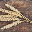 Wheat close up — Stock Photo