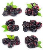 Collage of sweet blackberry fruit — Stock Photo