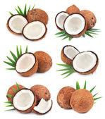 Samling av kokosnötter — Stockfoto