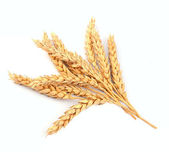 Wheat bunch — Stock Photo