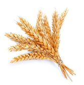 Wheat bunch — Stock Photo