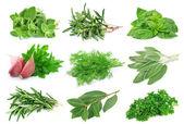 Instellen van groene kruiden — Stockfoto