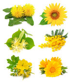 Set of spring yellow flowers — Stock Photo