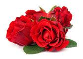 Czerwone róże na białym tle — Zdjęcie stockowe