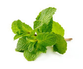 Fresh mint close up — Stock Photo