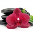 Orchid on black stones — Stock Photo #24898911