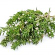 Thyme fresh herb — Stock Photo