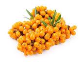 Sea buckthorn berries branch — Stock Photo
